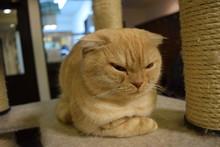 子猫, 動物, 猫科の, かわいい, 毛皮, 動物, くつろいで, 美しい, 茶色, ウィスカー, 怒る, 怒り, 不機嫌