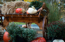 Pumpkins And Flowers On The Cart. Decorations On The Street