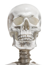 Light Human Skull With Neck Isolated On White