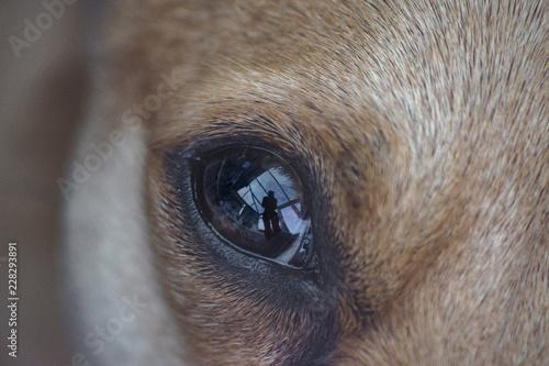 Canvas Prints Elephant chihuahua dogs eye