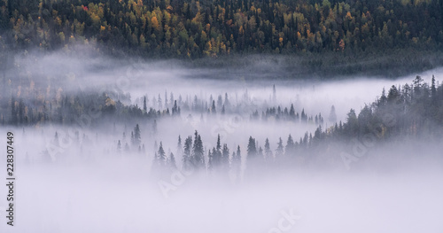 Poster Morning with fog Scenic forest landscape with fog and misty mood at autumn morning in Finland.
