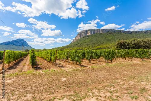 vignoble du Pic Saint-Loup, Hérault, Occitanie, France