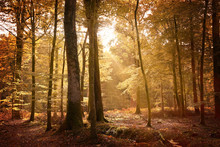 Autumn Landscape In The New Forest