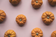 Autumn Pumpkins On A Pastel Pink Background