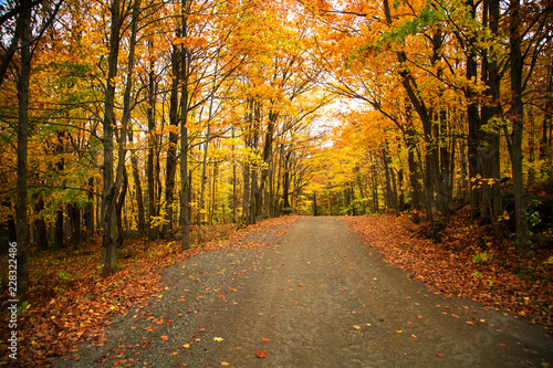 Canvas Prints Autumn Yellow trees over a rural road