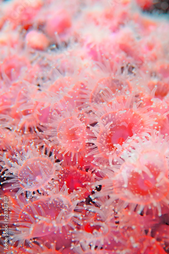 Poster Onder water Feeding of coral polyps
