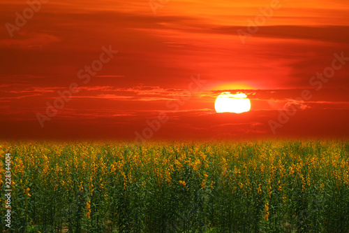 Foto auf AluDibond Ziegel sunhemp in field in the valley sunset and the colorful sky
