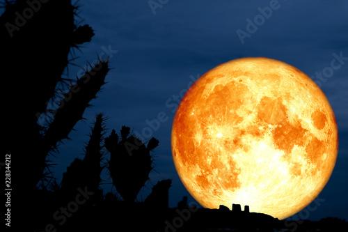 super full blood moon back silhouette cactus in desert