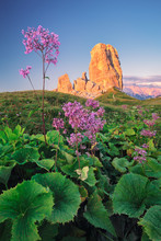 Purple Flower With Mountain In The Background