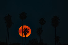 Blood Moon Behind Palm Trees