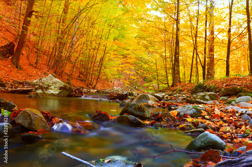 autumn stream in the forest, gold autumn European landscape