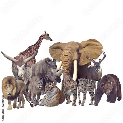 Fotobehang Leeuw Wild mammals on white background