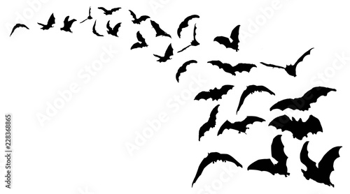 Photo Flying bats in the nightsky