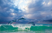 Group Of Dolphins Jumping On T...