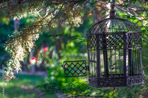 Freedom, Birdcage, Open Canvas Print