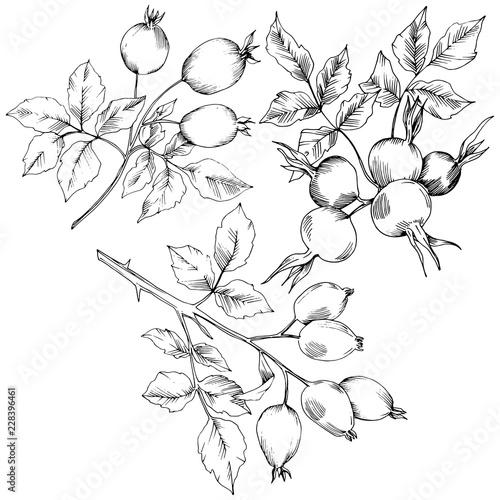 Autumn Rose Book