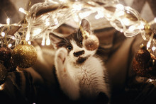 Cute Kitty Playing With Ornaments In Basket With Lights Under Christmas Tree In Festive Room. Adorable Funny Kitten With Amazing Eyes. Merry Christmas Concept. Atmospheric Image, Brown Tone