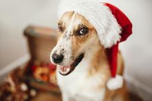 Cute Dog In Santa Hat With Ado...