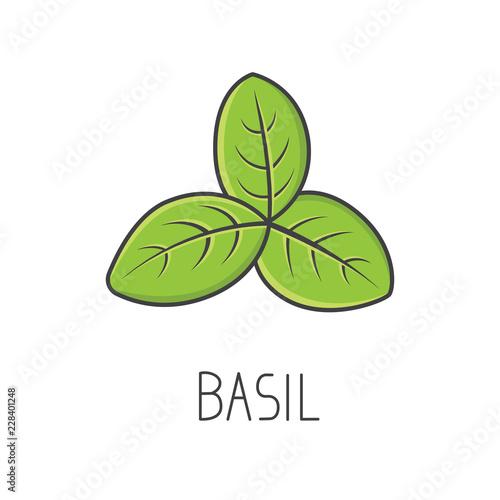 Foto Basil line vector illustration, cooking isolated icon.