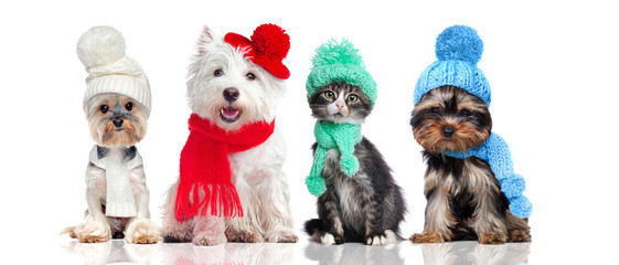 A group of pets wearing hat...
