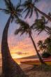 Paddling Canoe on beach in Maui at sunset