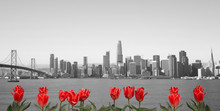 Black And White Skyline Of San Francisco With Red Flowers On Front