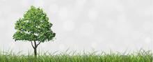 Tree In Green Field With Bokeh...