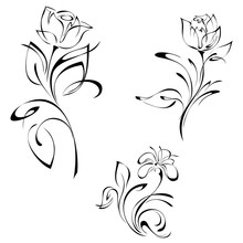 Stylized Rose Flowers On Stems With Leaves Black Lines On White Background. SET