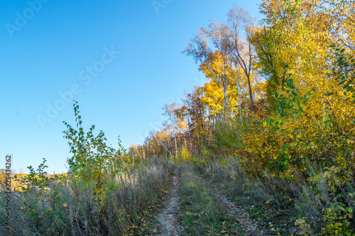 Tuinposter Pool the mountain autumn landscape with colorful forest