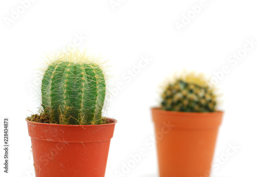 Fotobehang Cactus cactus in pot isolated on white background