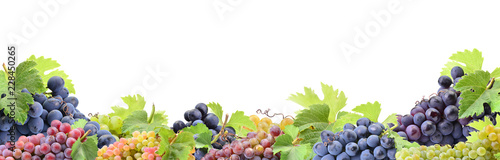 Fotografia  Grapes on a white background