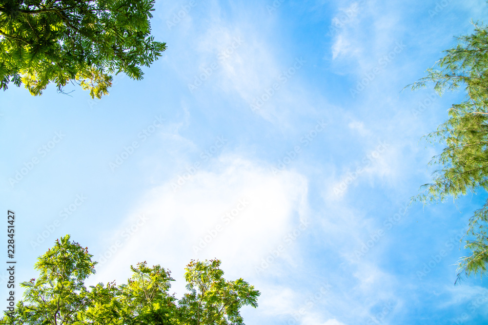 Fototapeta Green foliage background cloudy sky