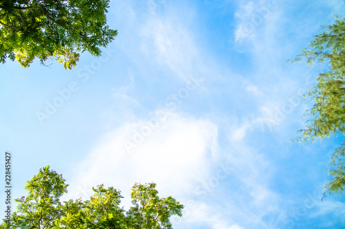 Fototapeta Green foliage background cloudy sky obraz