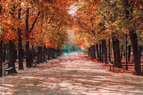 Fototapety, obrazy: Parisian Boulevard