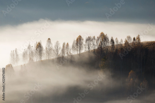 Poster Morning with fog Autumn landscape of the beautiful forest, at sunrise