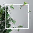 Leinwanddruck Bild - Creative layout made with fir tree branches on bright background with frame. Christmas New Year minimal concept.