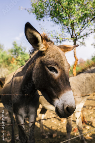 Close up of the donkey behind the fence