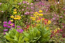 Herbaceous Flower Bed In Late Spring Or Early Summer, Filled With Primulas, Aquilegias And Weigela