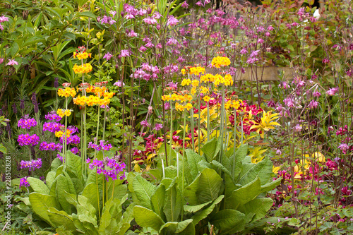 Herbaceous flower bed in late spring or early summer, filled with primulas, aqui Poster Mural XXL