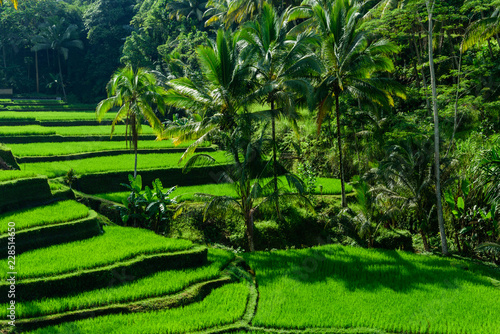 Foto op Aluminium Bali silence in the ricefields