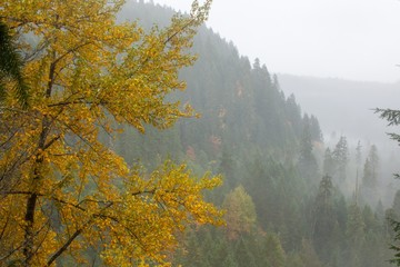 Obraz na Szkle Góry Fall color and a foggy forest in the Cascade mountains