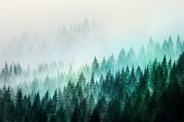 FototapetaTrees in morning fog. Digital painting..