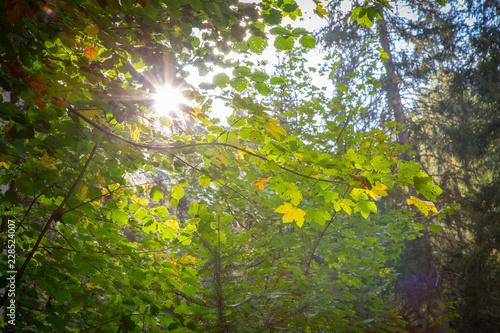 Staande foto Tuin Blätter mit Sonnenfleck