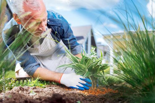 Valokuva  Grey-haired gardener