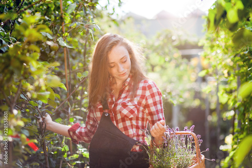 Fototapety, obrazy: Gardener woman with basket among greens in a garden center looking for plants