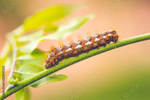 Big colorful caterpillar on green stem of plant with several leafs in background