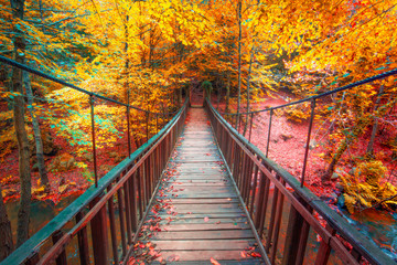 Fototapeta Optyczne powiększenie Autumn foliage and wooden bridge in the forest. Colorful leafs. Beautiful colors of autumn. Uludag National Park, Bursa.