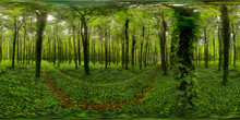 Green Forest, Combrit, France
