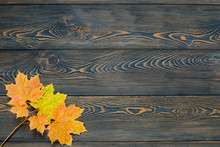 Autumn Leaf Life Cycle. Autumn Background With Colorful Fall Maple Leaves On Rustic Wooden Table.