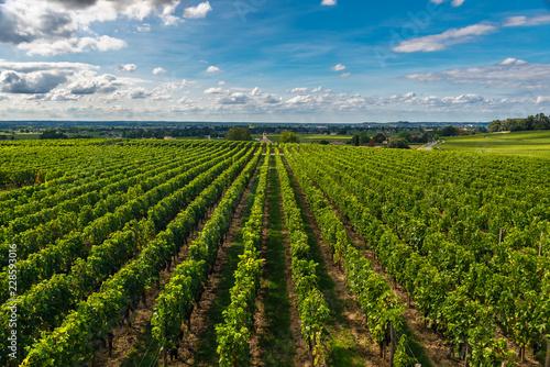 Fotomural Bordeaux vineyards beautiful landscape of Saint Emilion vineyrd in France